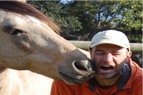 Si això ès un cavall 09